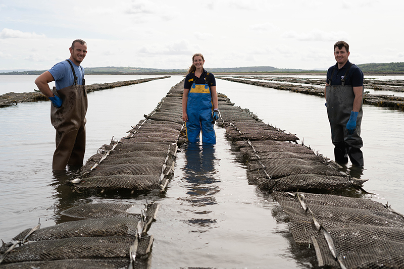 Fresh Rock Oyster Beds