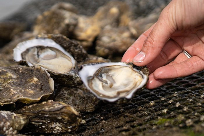 Fresh Rock Oysters