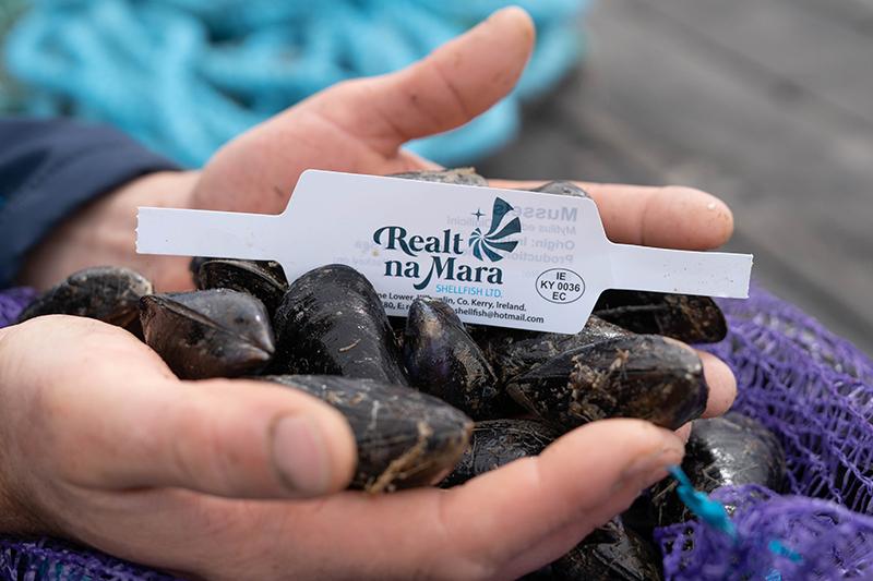Man holding fresh mussels